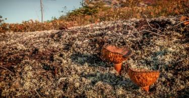 champignons parc des grands-jardins