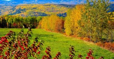automne (8)