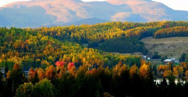 automne (378)