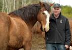 cheval enchanteur (5)