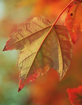 Image_automne